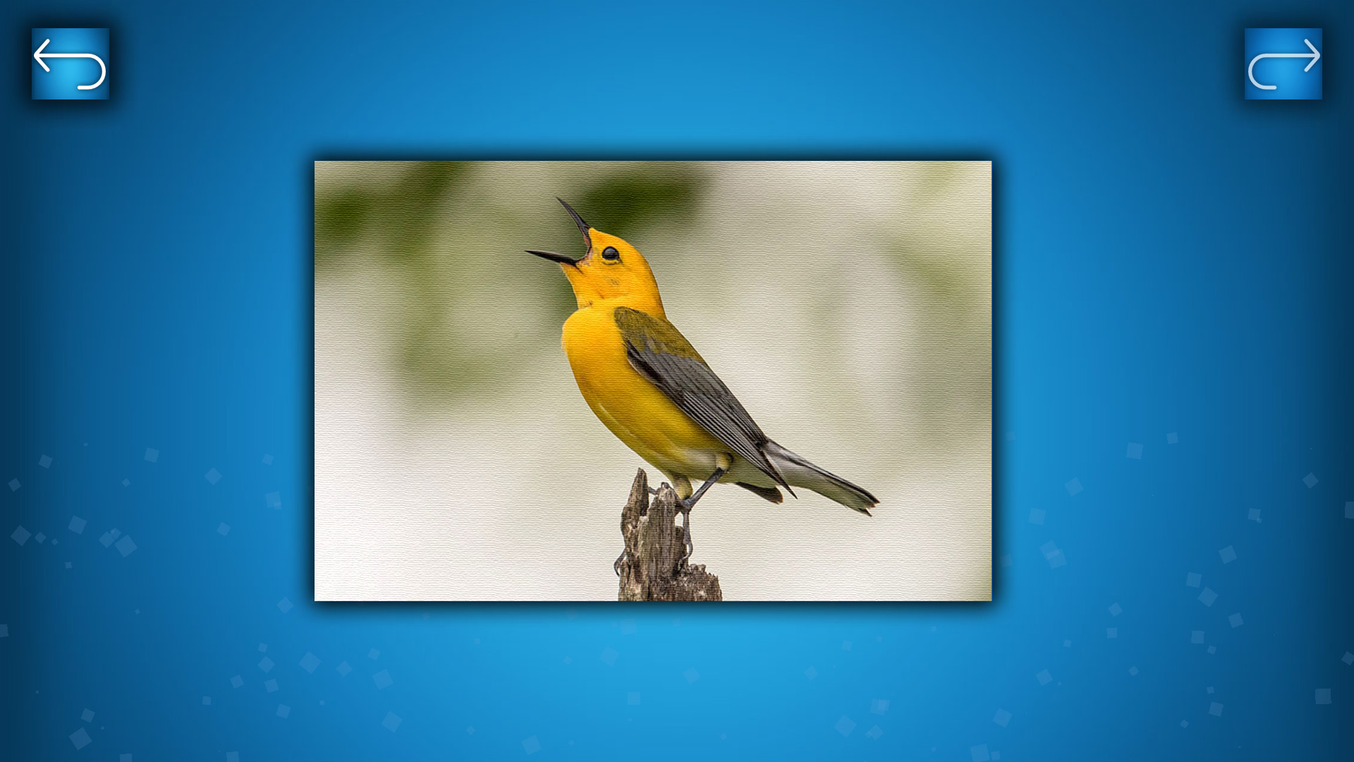 PUZZLE: BIRDS screenshot