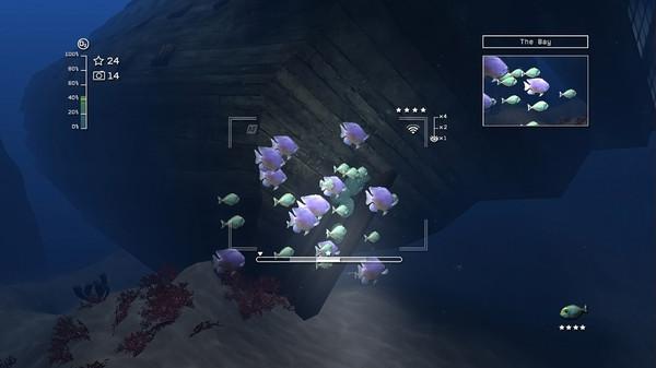 Reef Shot Ss_9b7cbd53aa5a3324546515ff84f944714c70c8f5.600x338