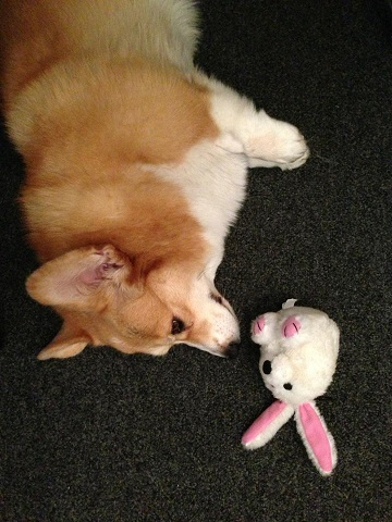 maia-bunny-smaller.jpg?t=1454443367