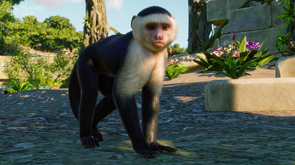 Скриншот №9 к Planet Zoo South America Pack