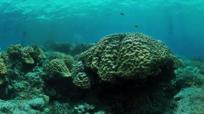 Coral Compass: Fighting Climate Change in Palau video