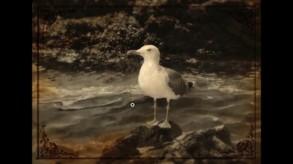 Lammana: The Looe Island Mystery video