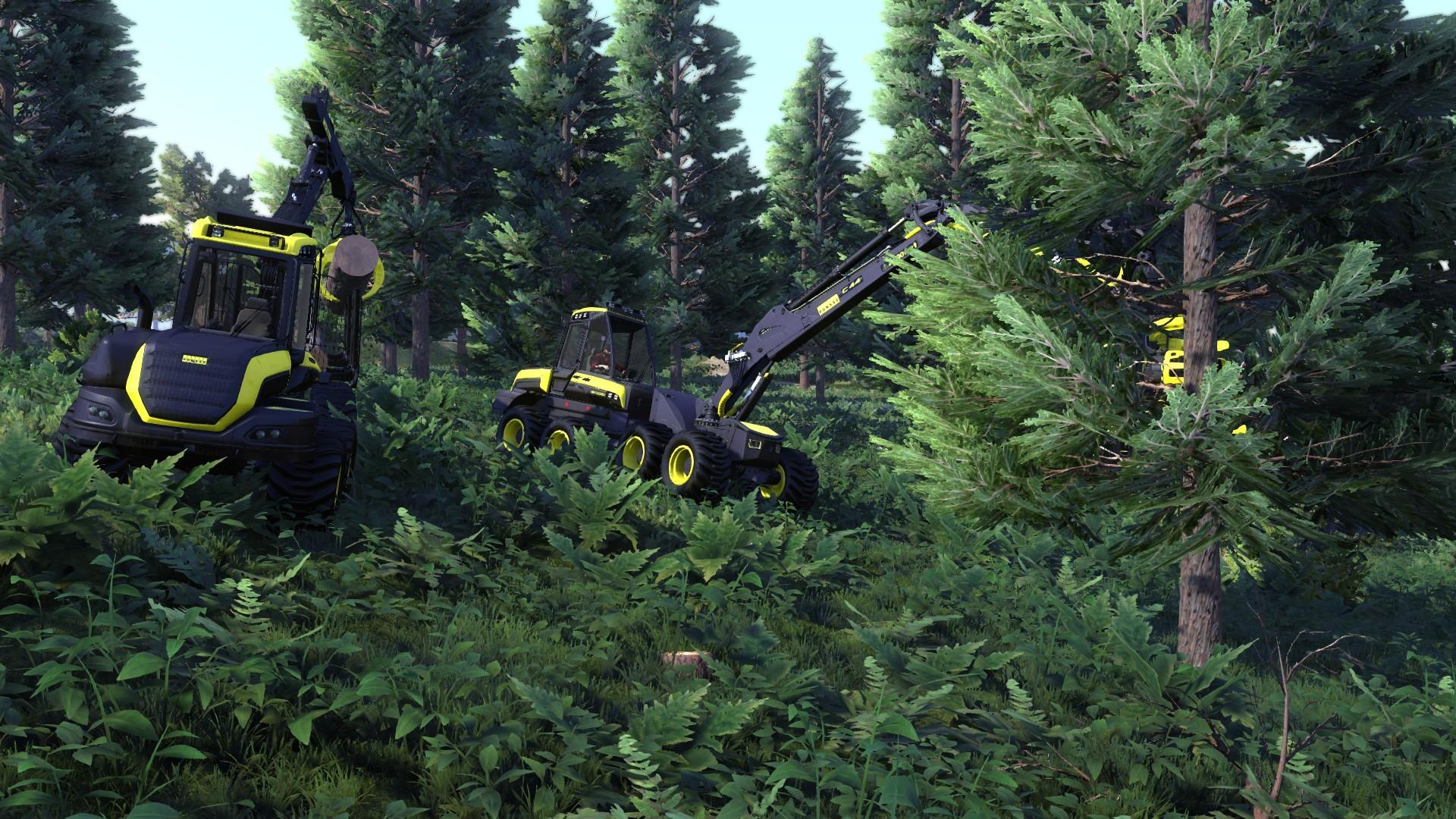 Lumberjack's Dynasty Resimleri